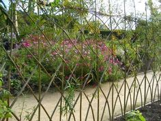 Living willow fence 2 - All About Natural Landscaping, Pond Landscaping, Back Gardens, Outdoor Gardens, Living Willow Fence, Deer Fence, Front Fence, Willow Garden, Pergola
