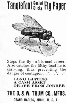Tanglefoot Sealed Sticky Fly Paper. Stops the fly in his mad career. Also catches the filthy load he is carrying, thus preventing the danger of contagion. (advert 1901)