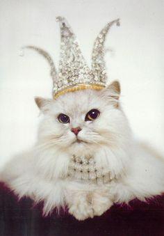 Gato com coroa