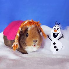 They've channeled Anna from Frozen… | These Guinea Pigs Dressed Up As Your Fave Characters Are Way Too Adorable