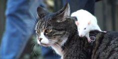 Een hond, kat en tamme rat die het goed met elkaar kunnen vinden. Ze vormen een circusact op straat waar voorbijgangers word uitgelegd hoe dit idee is ontstaan.