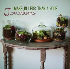 DIY Terrariums: DIY Container Garden: DIY Make Terrariums Galore in Under 1 Hour