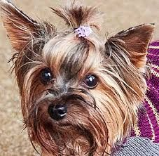 OTELLO. Hundepullover Dog Sweaters, Dogs, Animals, Animaux, Doggies, Animal, Animales, Pet Dogs, Dog