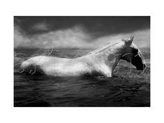 Cheval blanc en train de nager  - Tim Gore Verbinski -