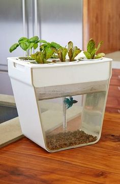Self cleaning fish tank. Fish waste fertilizes plants and plants clean the water.
