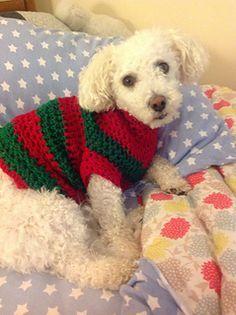 Dog Sweater   Free Pattern