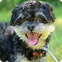 Adopt A Pet :: Magglio - Siler City, NC