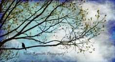 Bird and tree silhouette