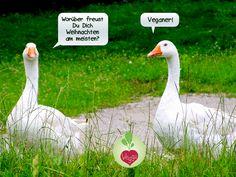 Vegane Weihnachten - bedeutet ein frohes Fest für ALLE!  #vegan #weihnachten #gänse #tierschutz