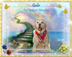 For our hero K9 Gabe.  Photo:Vote Gabe 2012 Hero Dog
