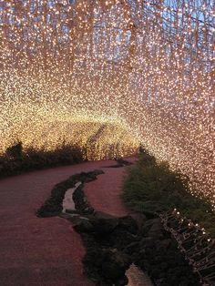 Fairy Lights by jasonmorley, via Flickr  What an outstanding thing this must be to walk through.
