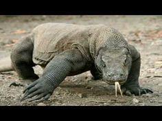 Ugly Animals, Giant Animals, Animals And Pets, Ugliest Animals, Reptiles, Amphibians, Large Lizards, Komodo Island, Apex Predator