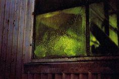 william eggleston : the hasselblad award 1998 : 1999 William Eggleston, History Of Photography, Color Photography, Street Photography, Landscape Photography, Portrait Photography, Nature Photography, Fashion Photography, Wedding Photography
