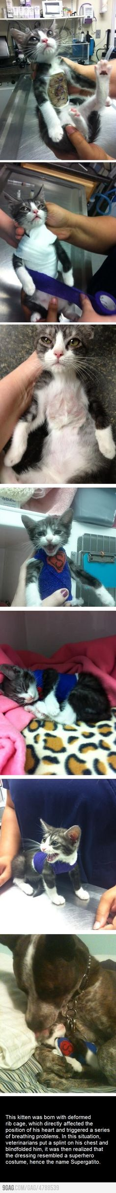 So sad.... Poor kitty...