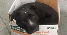 This rescue dog, Captain, sleeps in a box to feel secure. Please help Capatain find his forever home...Detroit.