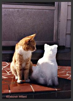 #Yellow Cat and Snow Cat  Like,Repin,Share, Thanks!