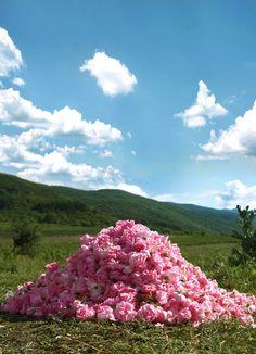 Land Of Roses Bulgaria To The Kazanlak Festival Of