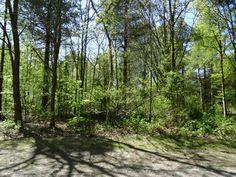 Prachtige bossen op Texel