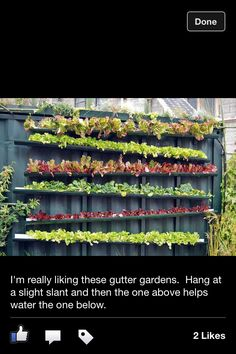 This is Gutter Gardening that a friend of mine on Facebopk posted. Such a great idea!