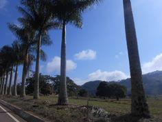 Serra do Brigadeiro -  MG - Brasil