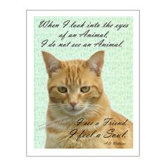 Cat Print Cat Poster Cat Art When I Look Into by PawsomeArtDesigns, $12.00