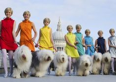 Superbrands show their true pedigree: a group of models go walkies with Dulux dogs on London's Millennium Bridge to celebrate the paint-maker's eighth place in the annual list of consumer superbrands.