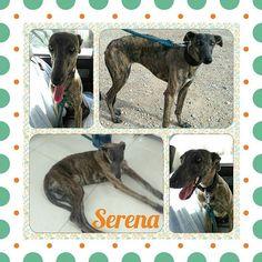 Serena salió de la perrera con dolor en una pata y, tras hacerle una radiografía,  n...