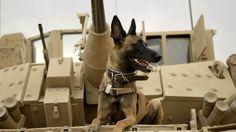 FREE Sneak Preview of Max. Best Friend. Hero. Marine. Sun, Jun 21  |  Bulldog Box Office. Info at mccsCP.com/theater