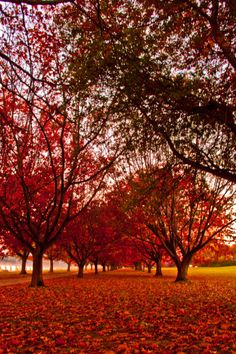 Autumn in #Canberra, ACT, #Australia. http://www.travelmagma.com/australia/things-to-do-in-canberra