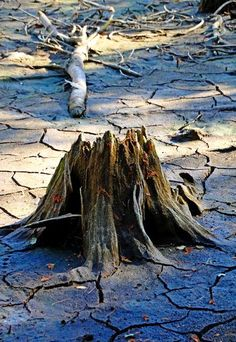 "Check out my art piece ""Anchored In Mud"" on crated.com #abstract #wood #art #photography"
