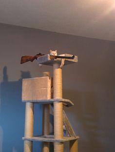 Francotirador gatuno. #humor #risa #graciosas #chistosas #divertidas