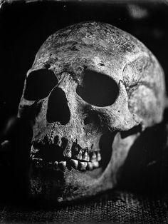 Crane, Skull Reference, Blackout Tattoo, Airbrush Tattoo, Bild Tattoos, Skull Island, Realism Tattoo, Creepy Art, Vanitas