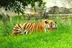 Papikonda Wildlife Sanctuary - in Telangana, India