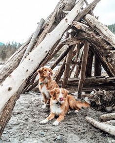 🌎 i'm so excited to get outside & go on an another adventure with my bro today! Puppies Tips, Dogs And Puppies, Nova Scotia Duck Tolling Retriever, Little River, Happy Earth, Get Outside, Pet Portraits, Dog Bowls, Bro
