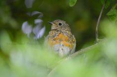 British Wildlife, Bird Feeders, Robin, Birds, Facebook, Outdoor Decor, Photography, Animals, Photograph