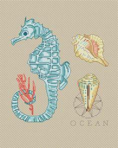 .Seahorse and shells