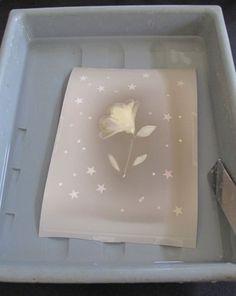 Lumen print in fixer bath.