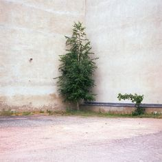 When plants reclaim the streets via http://99roots.com