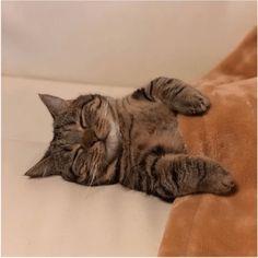 猫寝る--3