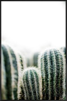 Bilder Cactus 1 as a poster in a plastic frame by Mareike Böhmer Cactus Backgrounds, Tumblr Backgrounds, Cool Backgrounds, Image Cactus, Cactus Art, Flowers Wallpaper, Love Wallpaper, Arabesque Design, Dont Touch My Phone