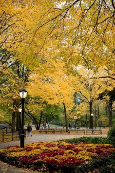 Central Park in Autumn, New York City.