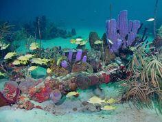 Reef Diving, St. Croix, USVI