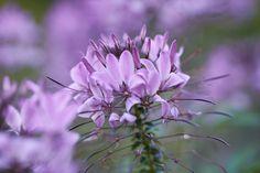 flower by Michel Mayerle on Flowers, Plants, Landscapes, Florals, Planters, Flower, Blossoms, Plant, Planting