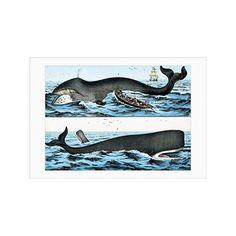 Buyenlarge 'Whales' by Heinrich V. Schubert Graphic Art & Reviews | Wayfair