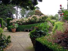 Kiftsgate Court Garden  Love the angled, curved hedge with...oleander? behind