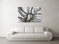 """Branches Art Print by Ren Kuljovska. Our art prints are produced on acid-free papers using archival inks to guarantee that they last a lifetime without fading or loss of color. All art prints include a 1"""" white border around the image to allow for future framing and matting, if desired.  #wallart #artdeco #homedeco #homedecor #artprint #artprints #wallartideas #print #giftidea #giftideas #canvasprint  #snowy #wintermagic #branches #snowyromance Branch Art, Picture Walls, Thing 1, Nature Artists, Nature Artwork, Wall Art For Sale, Decor Ideas, Gift Ideas, Floral Pillows"""