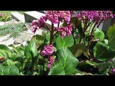 Modern, letisztult és könnyen ápolható kert ötletek - Kertépítés, kerttervezés #kertépítés - YouTube Modern, Youtube, Plants, Trendy Tree, Plant, Youtubers, Youtube Movies, Planets