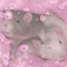 Hamsters, Rodents, Baby Animals, Funny Animals, Cute Animals, Photo Deco, Cute Rats, Kawaii, Cybergoth