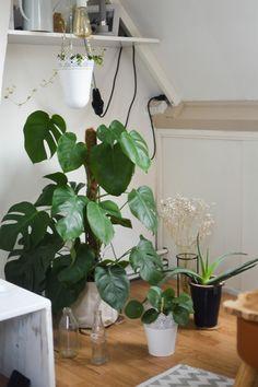 Myrthei: De 8 mooiste kamerplanten die wél in leven blijven + tips