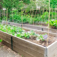 Do's and Don'ts for Raised Garden Bed